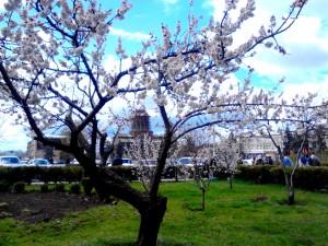 Spring in Gyumri